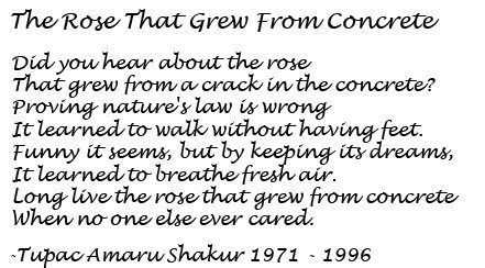 Tupac Poem The Rose That Grew From Concrete 3 I Have The Book