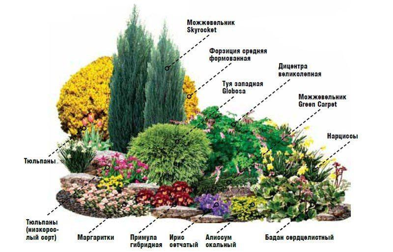 рокарий схема и растения