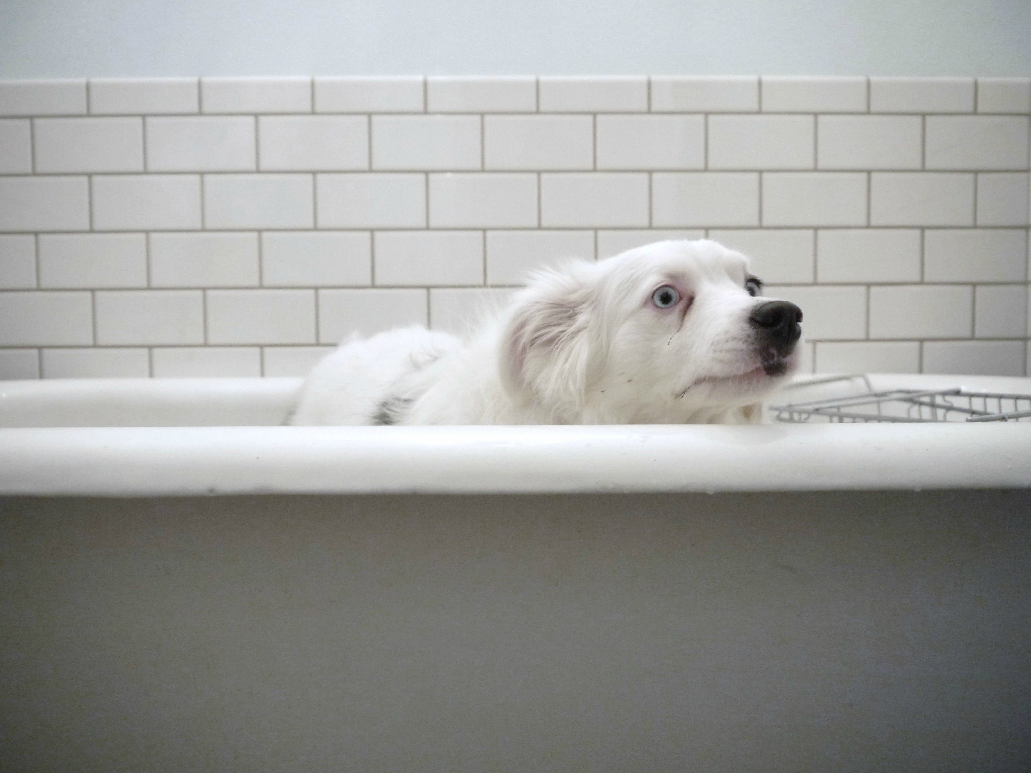 Anything But Bath Dog Thoughts Cool Pets Dogs