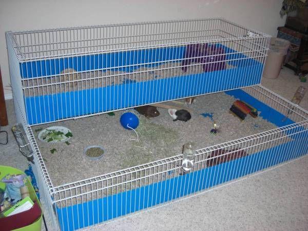 Pin On Ratties Piggies