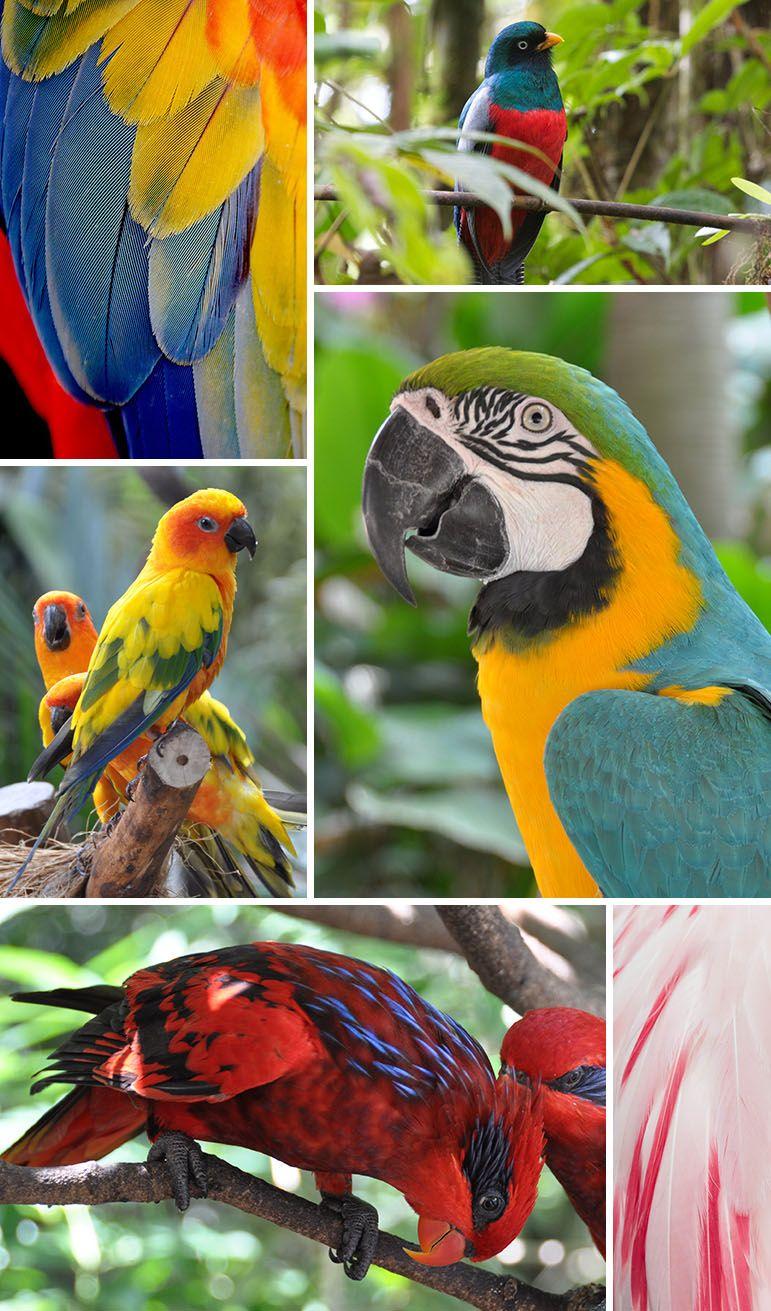Found Patterns Tropical Birds Pattern Observer Tropical Birds Birds Wild Birds