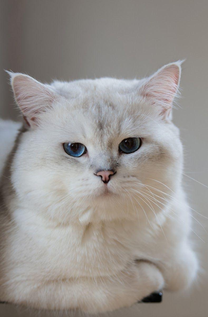 Cat Lovers - Meet Frisky The Cat...