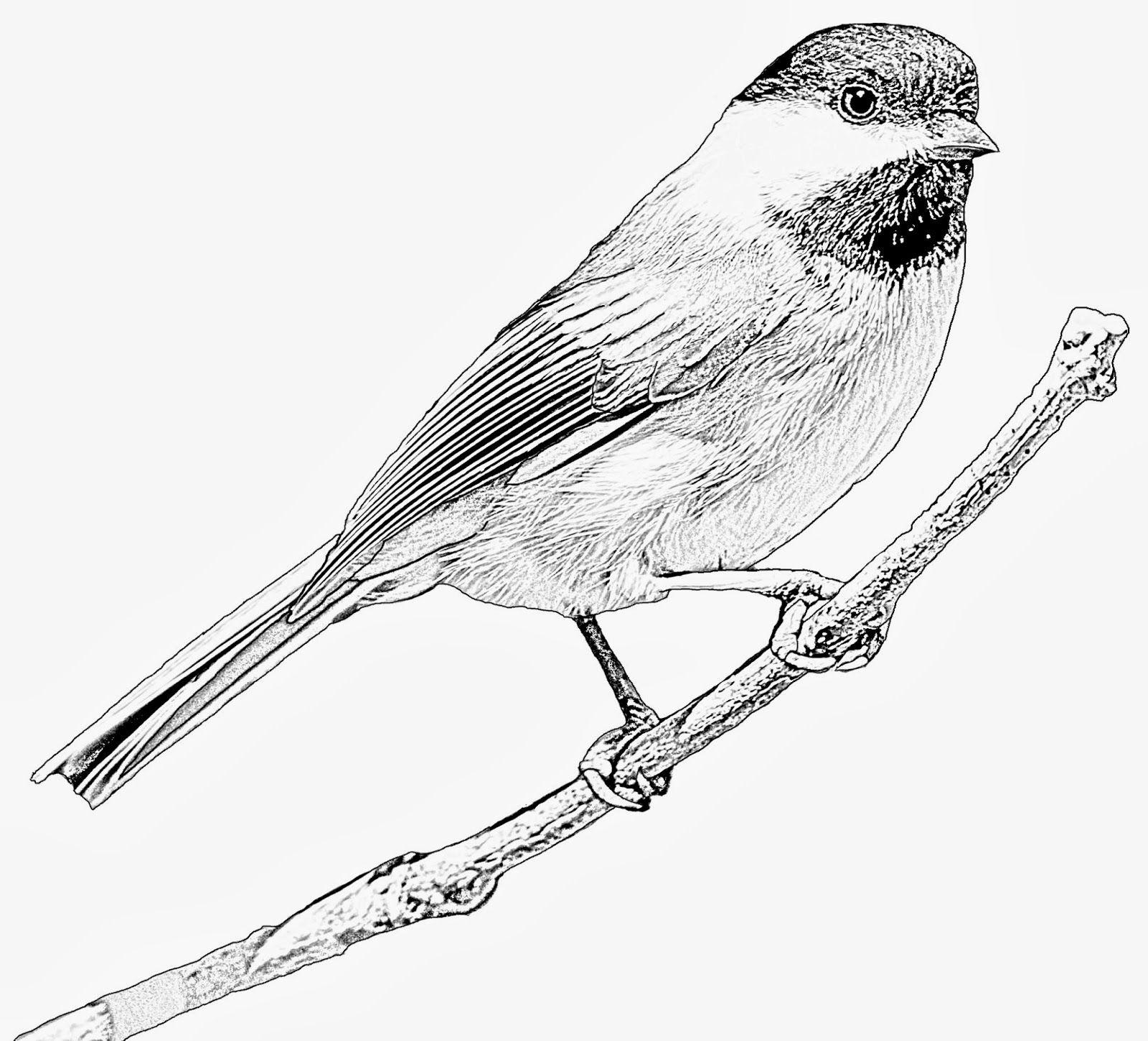 Free Birdi Digi