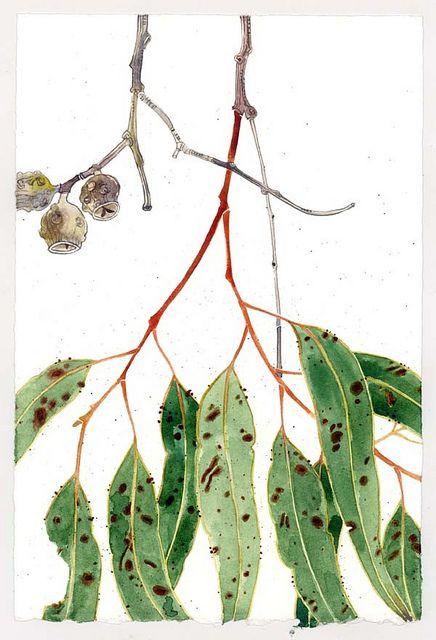 gumleaves2 Watercolor christmas cards, Botanical