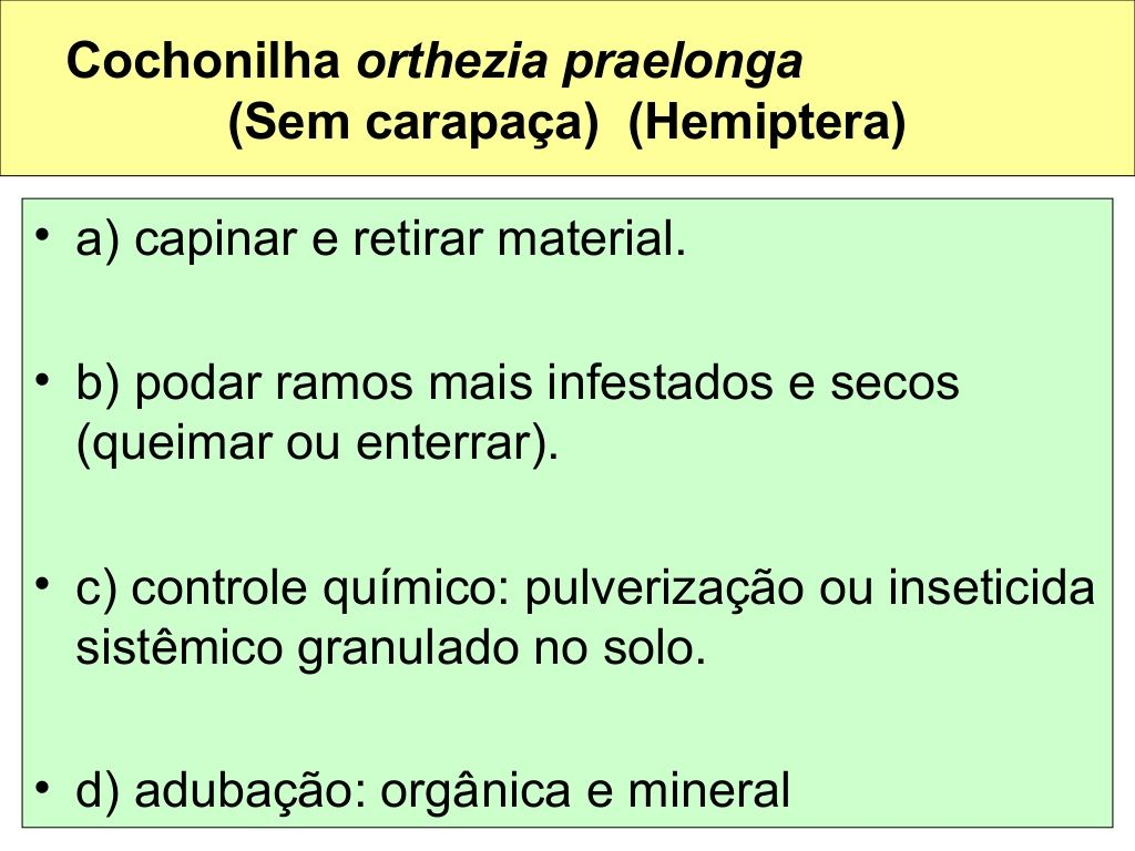 Orthezia praelonga en citricos dress