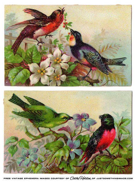 Beautiful vintage bird cardsFREE printable by JustSomethingIMade