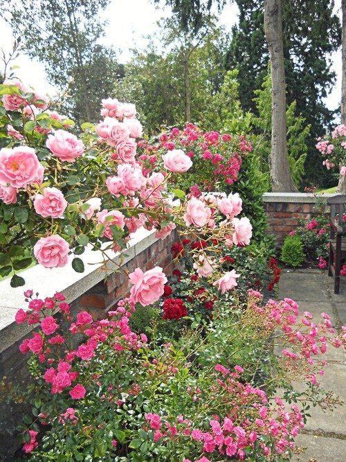 Thegardenheart Beautiful Flowers Flower Garden Beautiful Roses