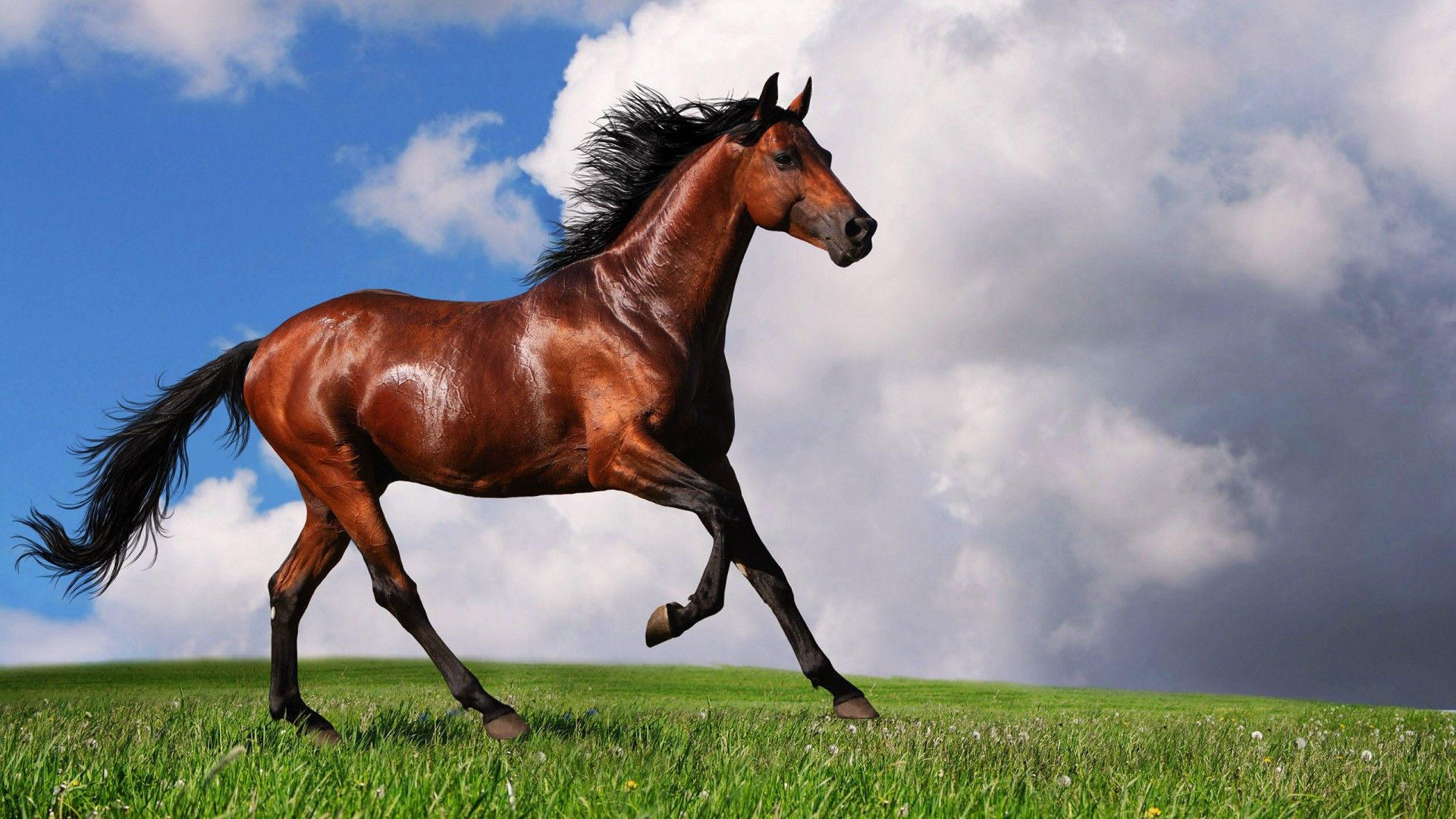 Equestrian horses hd wallpapers 2g jpeg image 1920 1080 equestrian horses hd wallpapers 2g jpeg image 1920 1080 pixels thecheapjerseys Choice Image