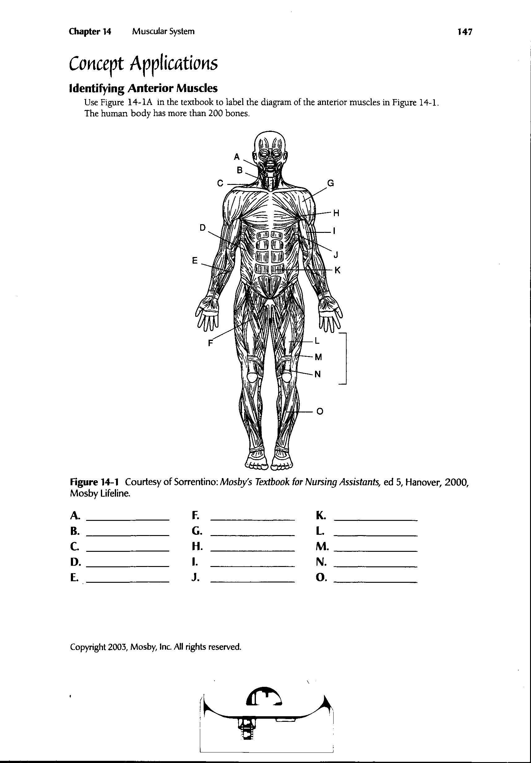 Muscle Diagram Worksheet