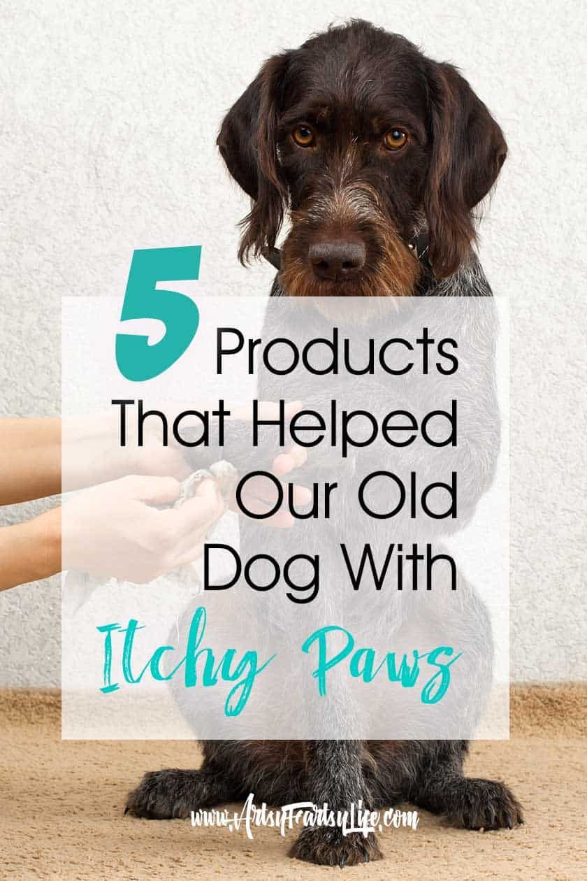 5 Products That Helped Our Old Dog With Itchy Paws Dog Paw Remedies Dog Chewing Paws Dog Biting Paws