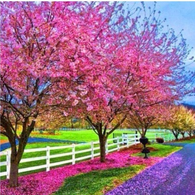I Love Spring Beautiful Nature Spring Spring Wallpaper Spring Desktop Wallpaper