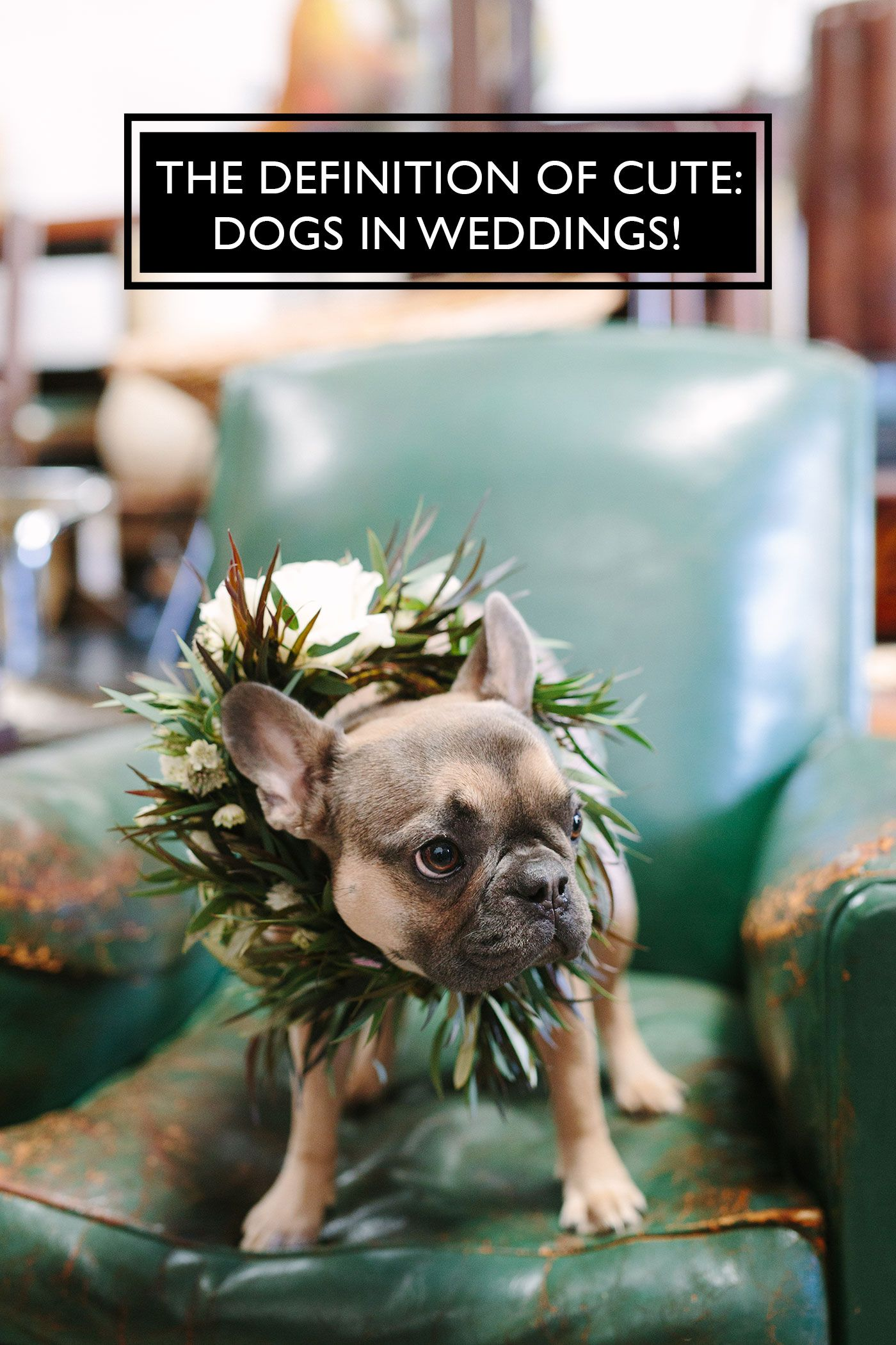 15 Times Dogs In Weddings Stole The Show Wedding Pets Pet Wedding Photos Dogs