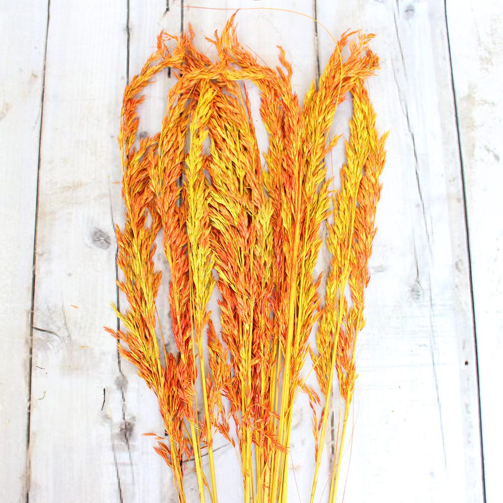 """Dried Wild Oats in Autumn Colors 6 oz Bunch Approximately 38"""" Tall"""