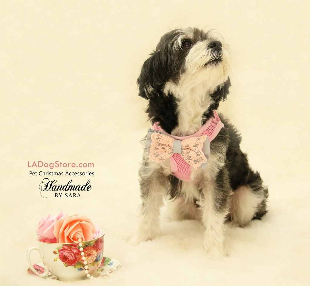 Dog Harness Lace Bow Attached To Dog Harness Gray Bow Tie Dog
