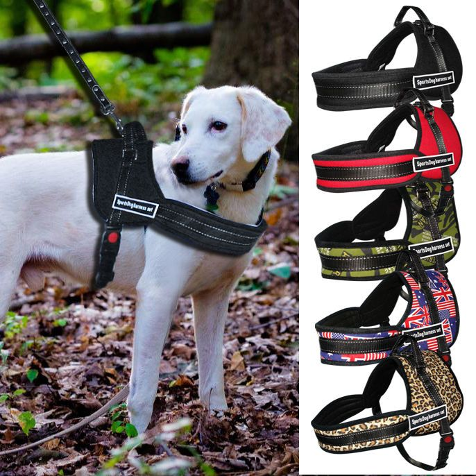 Beirui Harnesses Ebay Pet Supplies Dog Harness Dog Training