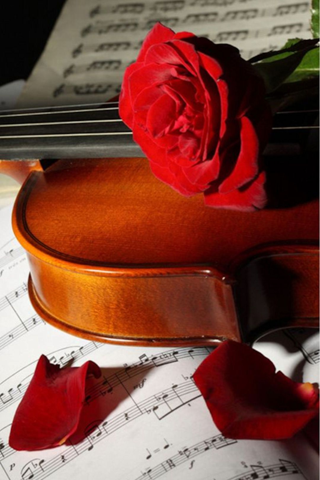 Empty room with chair violin and sheet music on floor photograph - Rose Violin And Sheet Music