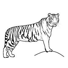 Coloring Pictures Of Cats Lions Cheetahs Leopards Tigers Google