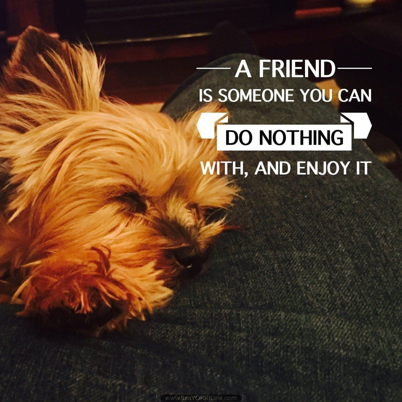 Love you!   Found at: http://itsayorkielife.com/love-you-5/  #Yorkie,#YorkshireTerrier,#Yorkielove,#ItsaYorkieLife