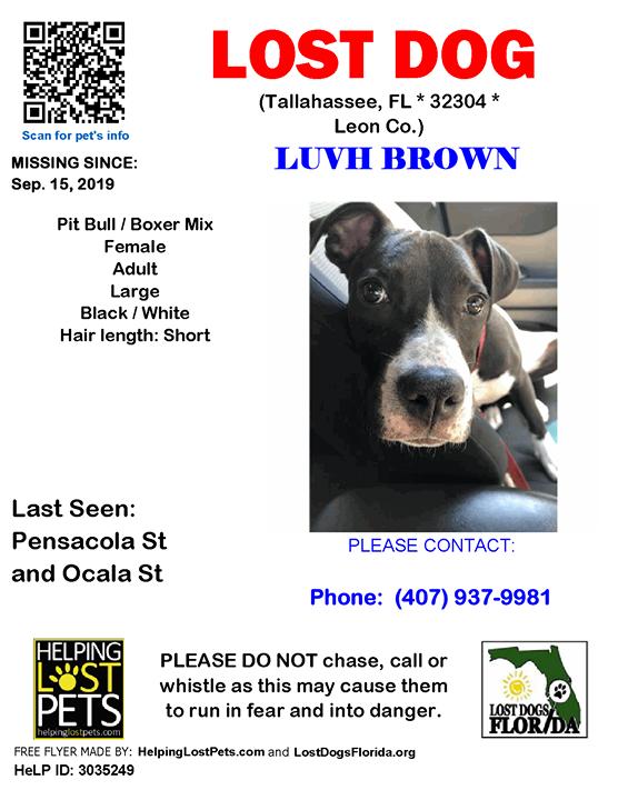LOST DOG Have you seen Luvh Brown? LOSTDOG Luvh Brown