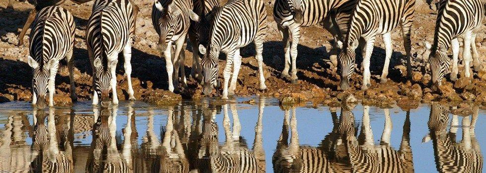Zebras - Namibië
