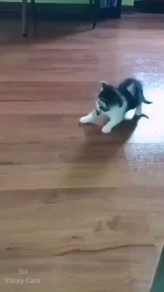Cats Lover (@CatsLov13532310)