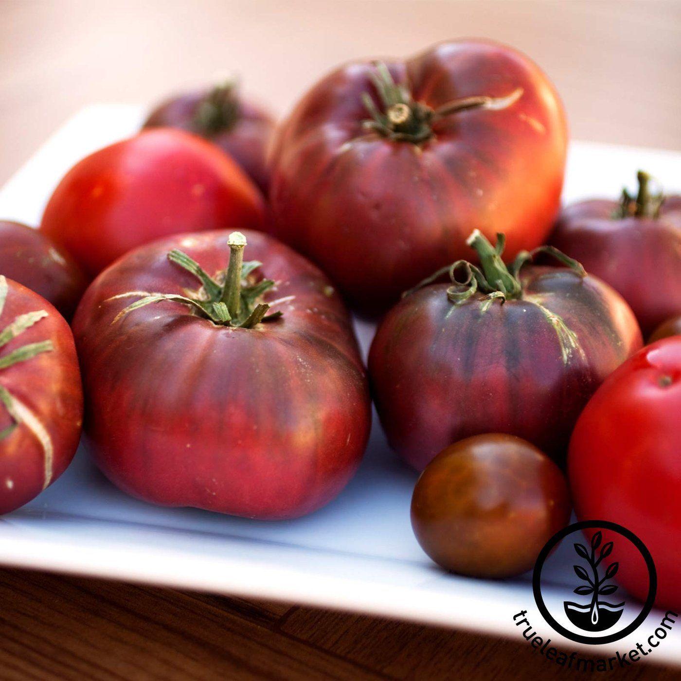Tomato Seeds Cherokee Purple Organic Home Vegetable 400 x 300