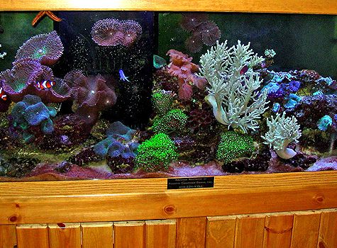 Aquarium Maintenance Marine Exhibit Maintenance Are Our Specialties At Aquatic Creations Group Inc Located In Ralei Aquarium Maintenance Aquarium Exhibition
