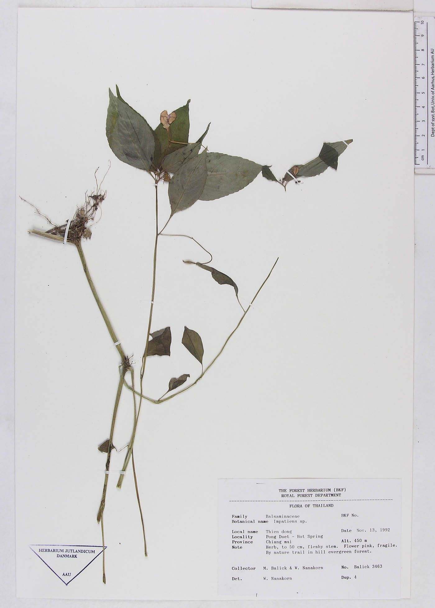 Aau Herbarium Database Projekter