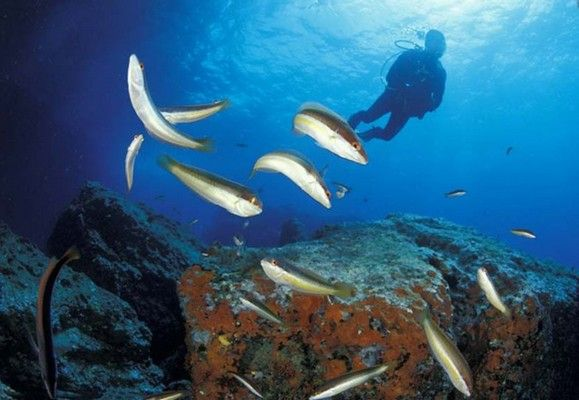 Diving Charter in Sardinia