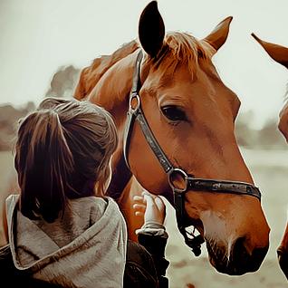 رمزيات بلاك بيري بنات كيوت رمزيات بي بي جديدة بنات كيوت Animals For Kids Equine Photography Animals