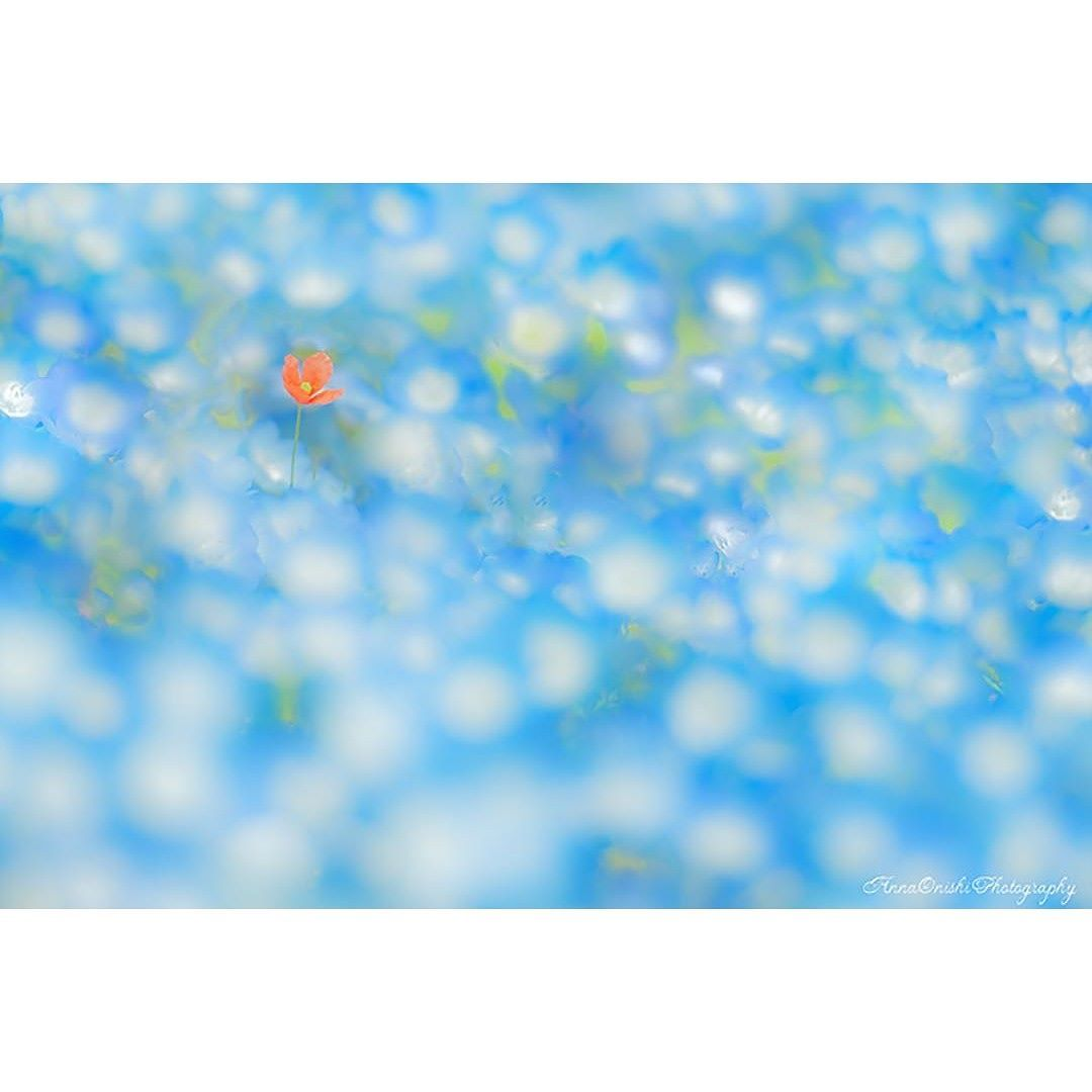 東京カメラ部 Editor's Choice:anna.o.photography