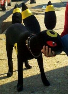Omg That S A Real Dog Pokemon Dog Costumes Real Dog