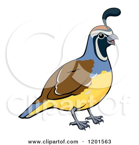 cartoon of a happy male california quail bird royalty free vector rh pinterest com free quail clip art gambels quail clip art
