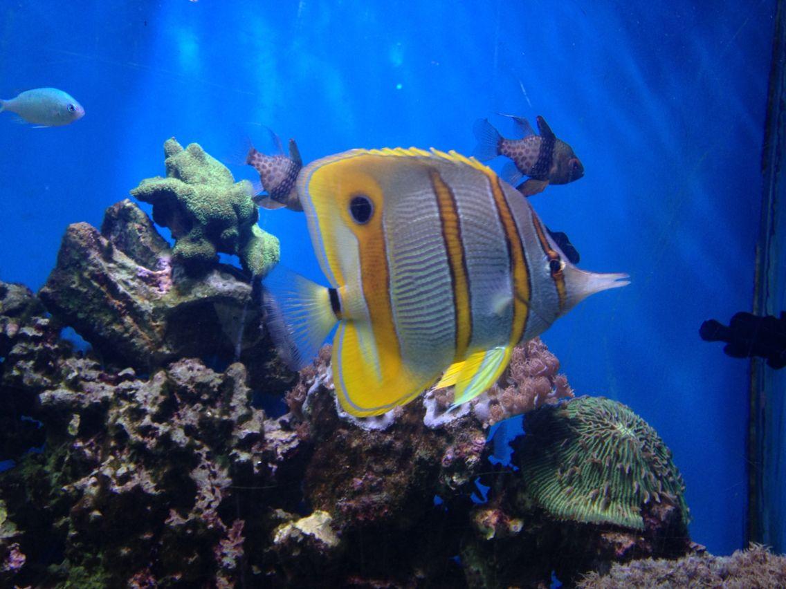 aquarium Destin, FL   Alam
