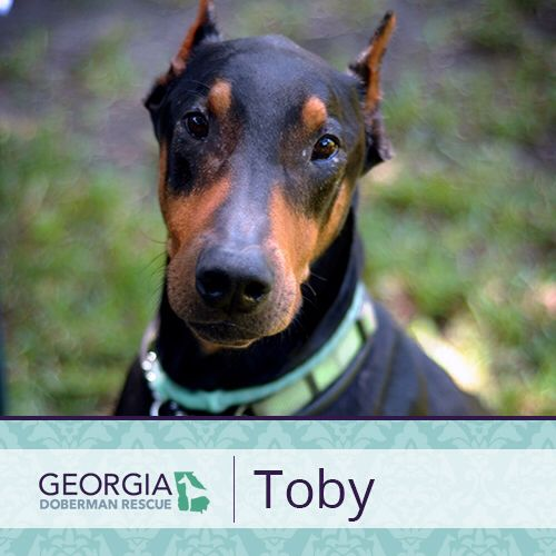 For more information on Toby check out his bio at https