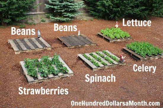 17 Best 1000 images about How to make a growbed on Pinterest Gardens