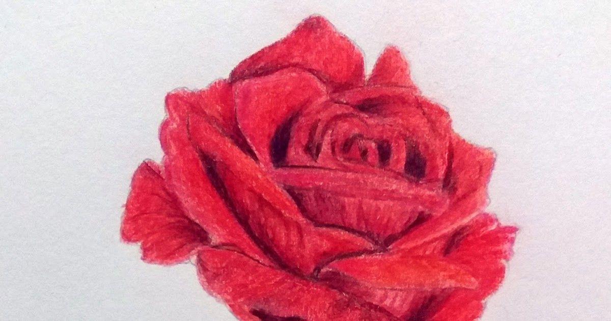 Paling Bagus 23 Contoh Lukisan Pensil Bunga Mawar Di 2020 Bunga