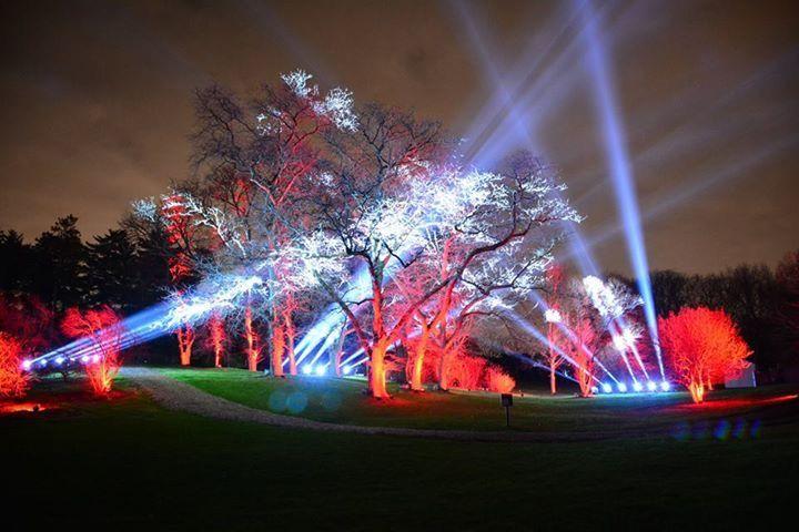 Morton Arboretum Light Show