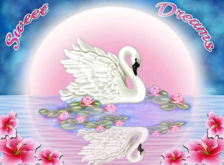Sweet dreams to you all my family and friends.☆☆☆☆☆☆