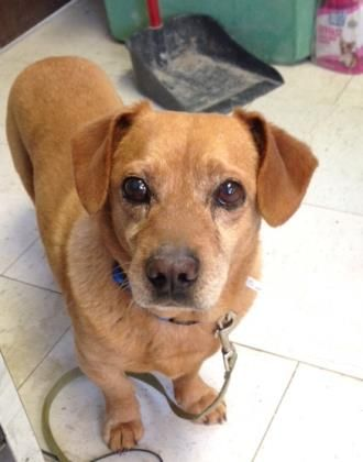 Adopt Jacky A Lovely 6 Years Dog Available For Adoption At