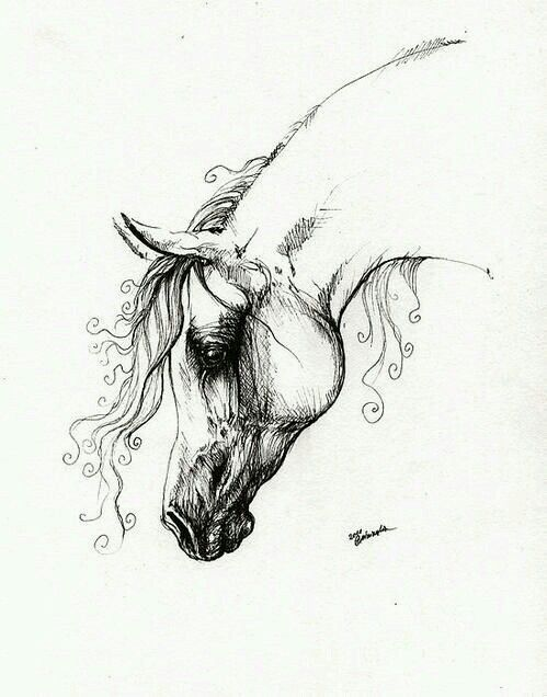 Line Drawing Horse Tattoo : Pin by jessi mullin on random art pinterest horse