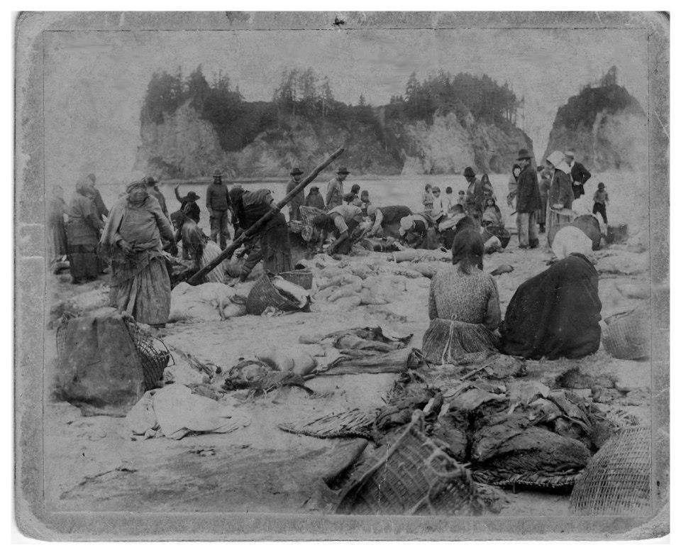 quileute nation LA Push Cultural patterns, Coastal