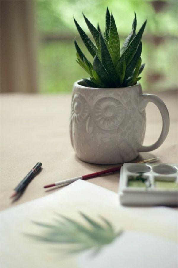 Zimmerpflanzen pflegeleicht und auch für Anfänger geeignet - 40 ...