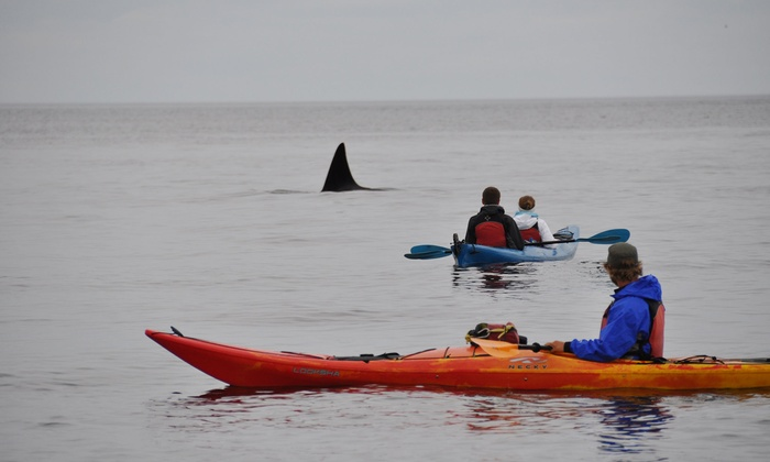 $39 For Three-Hour Guided Kayak Tour Of Point Doughty For