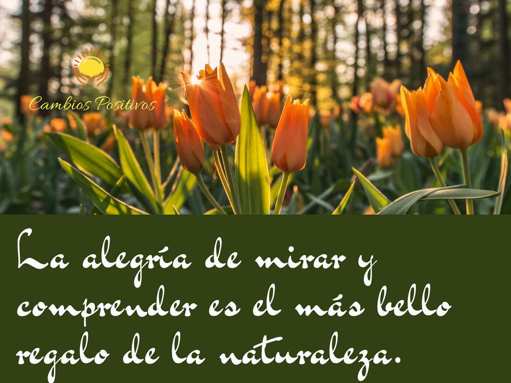 La alegría de mirar y comprender es el más bello regalo de la naturaleza.  #cambiospositivos #montsesatorra #reiki #terapia