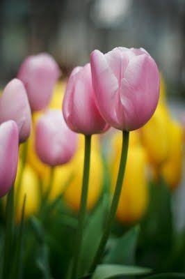 Gambar Bunga Lili Terindah 5 Bunga Terindah Di Dunia Estisyafaah21 6 Tanaman Hias Yang Cocok Untuk Dataran Rendah 75 Koleks Bunga Gambar Bunga Bunga Tulip