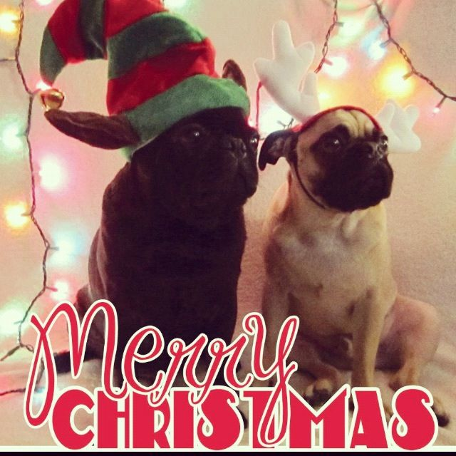 Pug Christmas! Love. Pugs. Sweet. Babies. Merry Christmas!