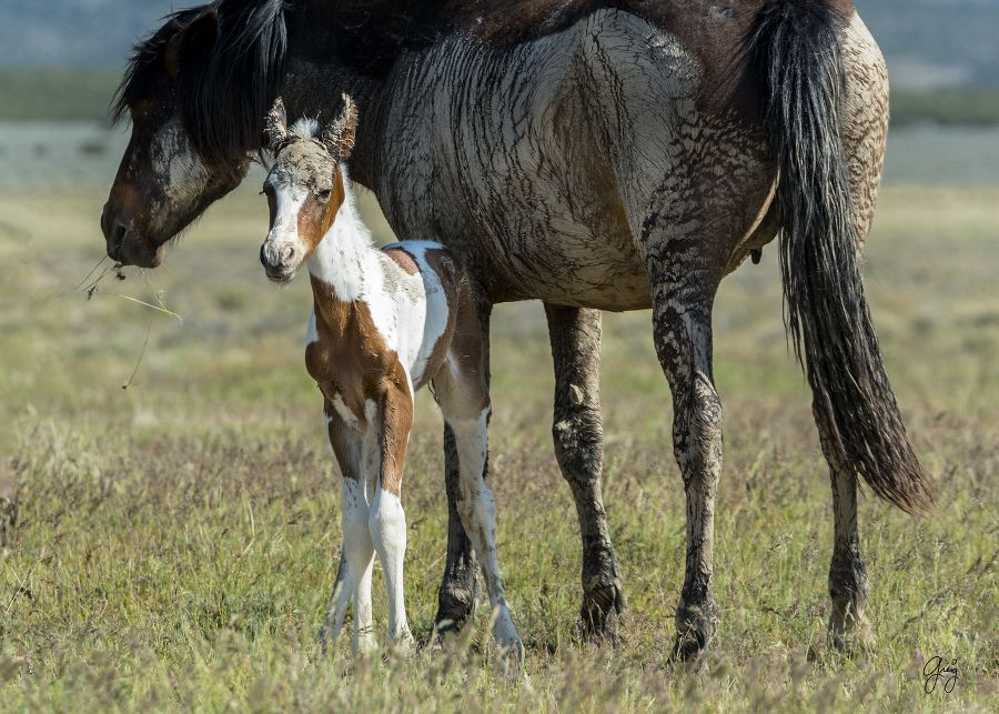 west desert may--4 Horse babies Pinterest Horses, Animals and