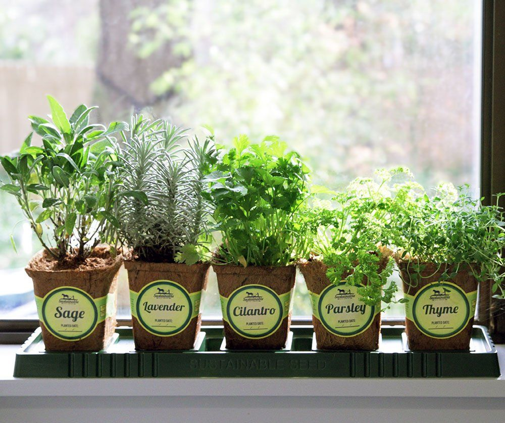 Windowsill Herb Garden Kit Herb Planter Comes Complete With A 10 Variety Non Gmo Heirloom Herb Seed Collection Herb Garden Kit Herbs Indoors Window Herb Garden