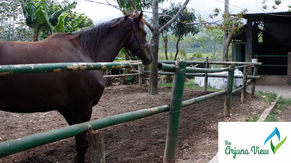 Imagine...  YOU,.. HORSING..??  Imagine to have a great time & environment at Arjuna View..